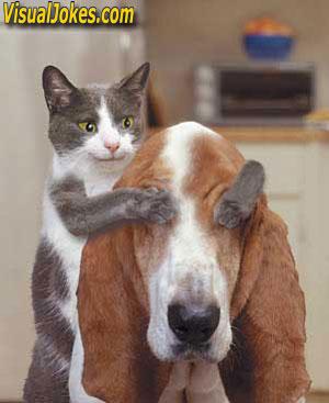 Cat LOVE Dog - Men LOVE Female ------ Cat LOVE Dog