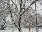 snow - snow