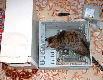 Computer Lovin Cat - Stuck online