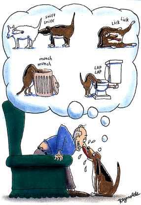 dog - dirty dog