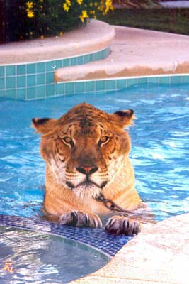 favorite animal - what is your favorite animal. i loved tigers.