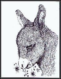 Baby Donket Sketch - Baby donkey I did in pen and ink years ago
