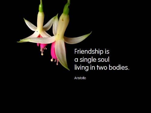 friendship - got the wording