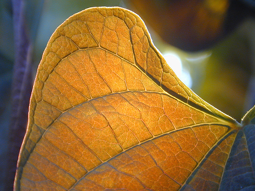 photography - foto of a leaf