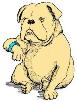 Do you wear your watch on the left or right? - A picture of a cute dog wearing a watch.