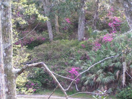 Azaleas in Ravine Gardens - This is a park in the town close to where I live. It has a deep ravine and is planted with many azaleas.