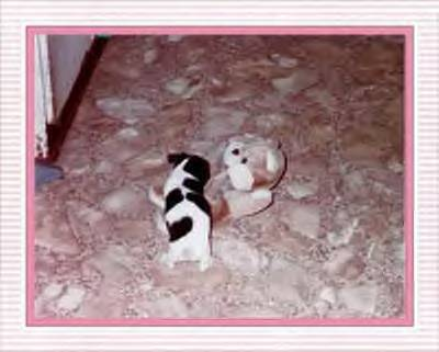 baby with teddy bear - baby with teddy bear, maggie, dog, rat terrier,