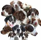 dogs gone wild - dog heads