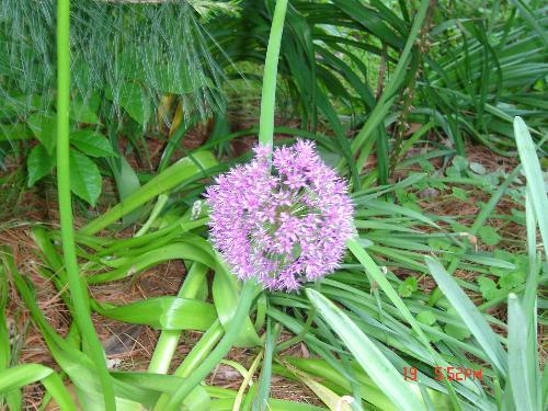 flower - flower from my neighbourhood