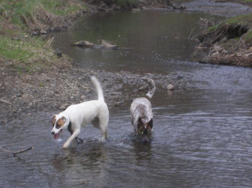 Look! We are good girls! - drinking from the river