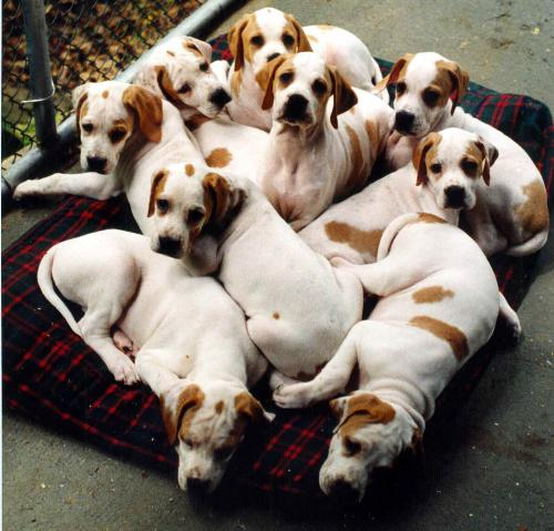Puppies - cute puppies