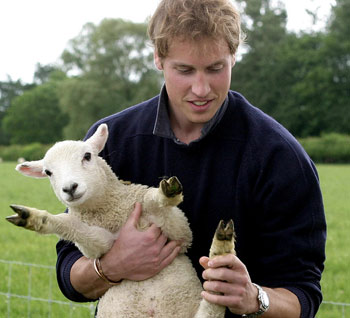 Lamb or dog? - At least Prince William knows his sheep.