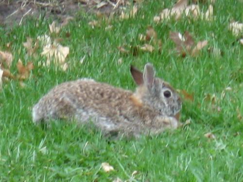 Resting A Bit - Such a cute little rabbit.