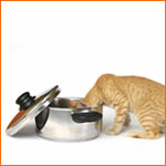 pec food recall updates...what you should know - stuff you should know and do about these pet food recalls