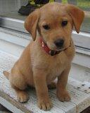 my best friend - my favroit dog's