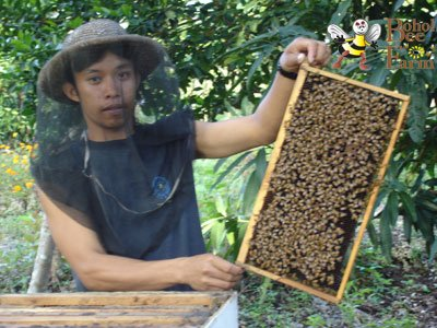 Colony of bees - The life story of bees are so amazing. They have worker bees who make the honey, the Janitor bees, who clean up their colony and throw away dead bees, Scout bees who would look for food. And many many more. :)