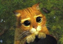 i m sad - sad face of a cat