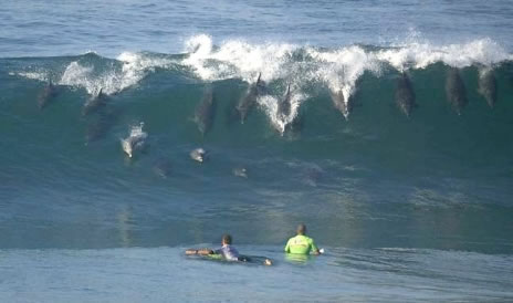 Surfers Company! - look who is coming for company to surf!
