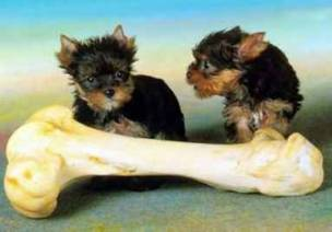 dogbone - picture of two dogs sharing in one bone. do you thing the other dog will still feel the same when the other dog is gone?