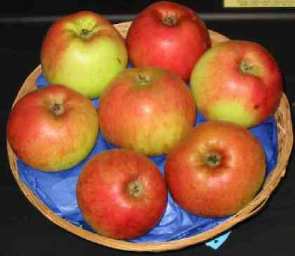 Apples - Monarch Apples
