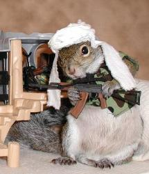 Osama Bin Squirrel - If You Had 10 Minutes With Osama Bin Laden, What Would You Say?