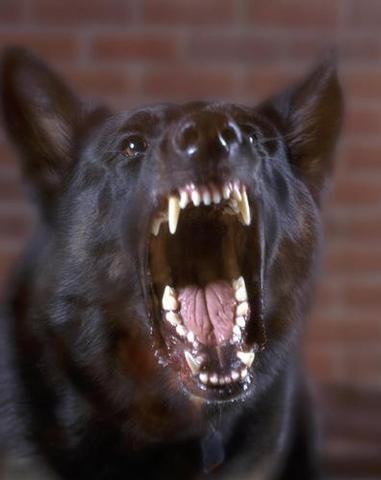 dogs are man's best friends?????????? - ferocious dog, have you ever been bitten by one?????