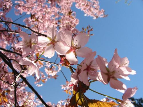 spring - what is your favorite season?