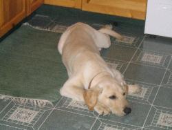 Titan - my puppy