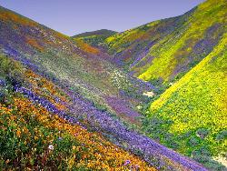Paint spill - this is gods paint spill it is a moutin side filled with colorfull range of wild flowers