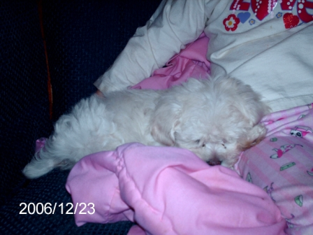 Fluffy - My little girl sleeping with her puppy.. God, rest his soul