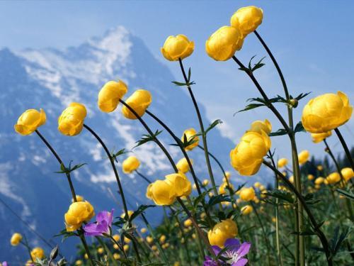 flower - how flower get colours n smell...!!!