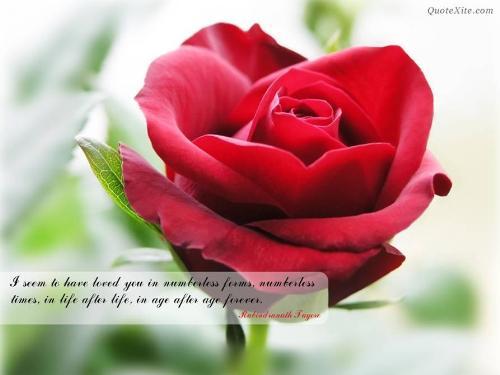 Rose for u! - From  Vijay