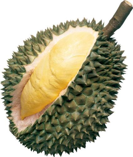 King of fruits - Durian - A large fruit that has a spiky outer skin encasing soft, creamy seeds of wonderful fruit within.