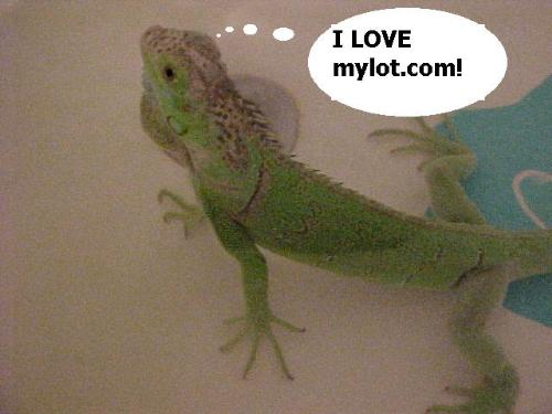 "Tiny iguana - A picture of an iguana thinking ""I LOVE MYLOT!"""
