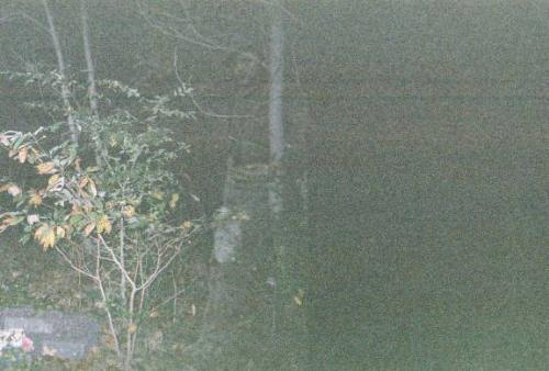 """Alfred - I found this photo at www.strangehappenings.com it was submitted by a girl named stacy and this is what was said about the photo    This incredible apparition was captured in an Arkansas cemetery, which sets off of a road that is said to be haunted. The photo was taken with a 35mm camera and """"Alfred"""" showed up in the negative as well."""