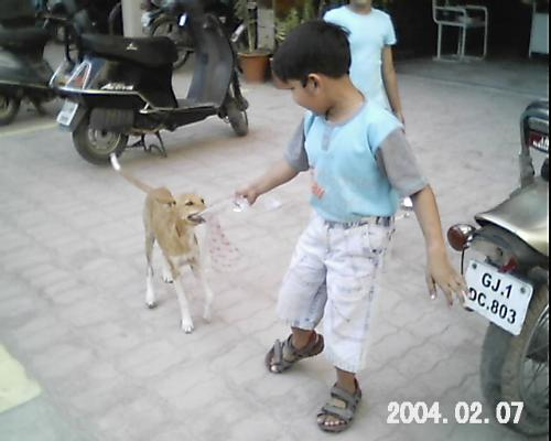 Kids celebrate stray puppy's birthday - Buzzy (stray pup) pulling at the packet of disposable glasses at its birthday party.