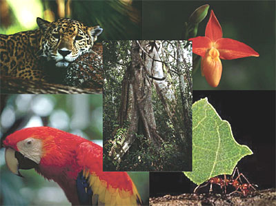 Biodiversity Rainforests - The living things in the rain Forest