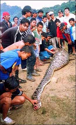 snake eat a perosn - its rear case a snake eat persons. its its true