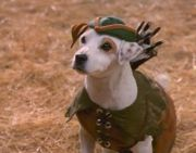 Wishbone as Robin Hood - Picture of the dog, Wishbone as Robin Hood