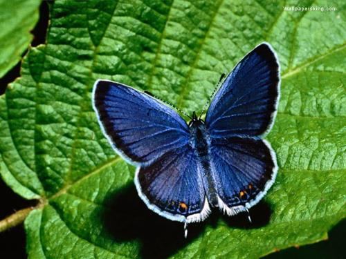 Butterfly - Vibrant and Beautiful , due to its own colour , the confidence and Powerful , with its association with the enthusiastic Leaf!
