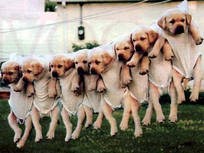 Pets - why they all are hanging are they are here for drying