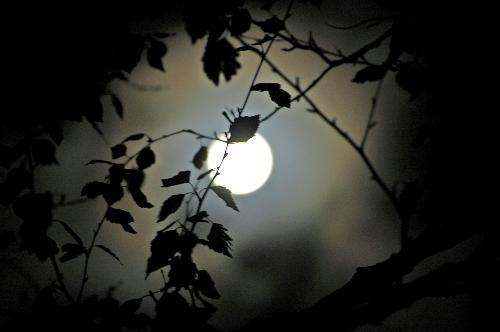Mgic photo of the moon - Its magic with the birch infront of the moon.