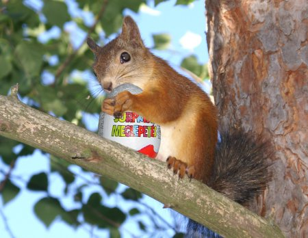 Finnish Red Squirrel - Taken from this site: http://finnmetal.com/blog/?p=194