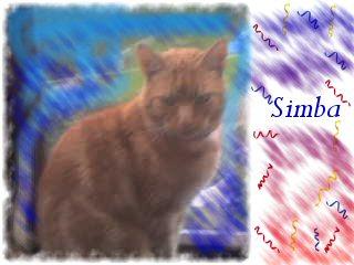 My Simba - This is my Simba  I hope he comes back
