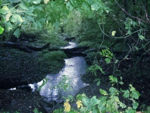 Creek - Loved the sounds coming from the creek earling morning