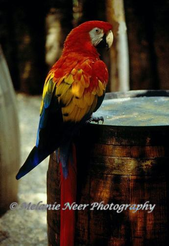 One of my photos with a watermark  - Bird photo with a watermark