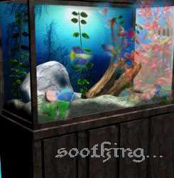 Fish tank - The thing that relaxes me most at home :)
