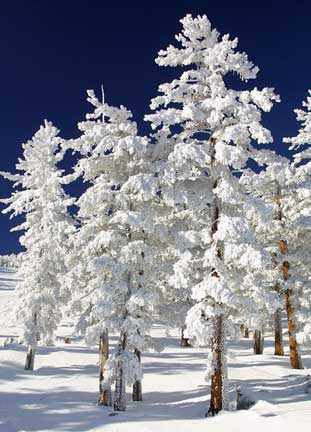 Snow - I love it - When I see snow, I miss christmass. I wish it snowed in our country.