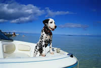 Dalmatians on the boat - Little Dalmatians on the Boat