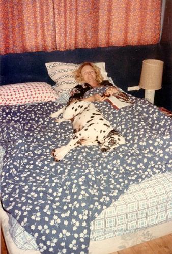 Dalmatian in bed - My girlfriend's dalmatian